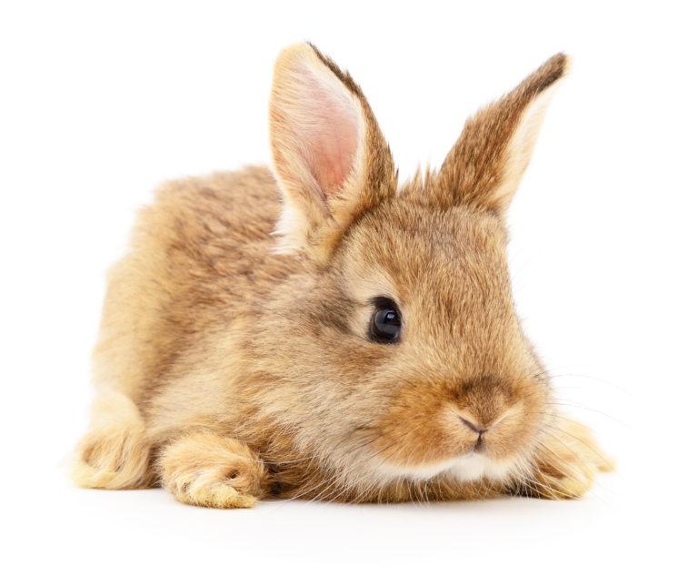 vi ska få en kanin