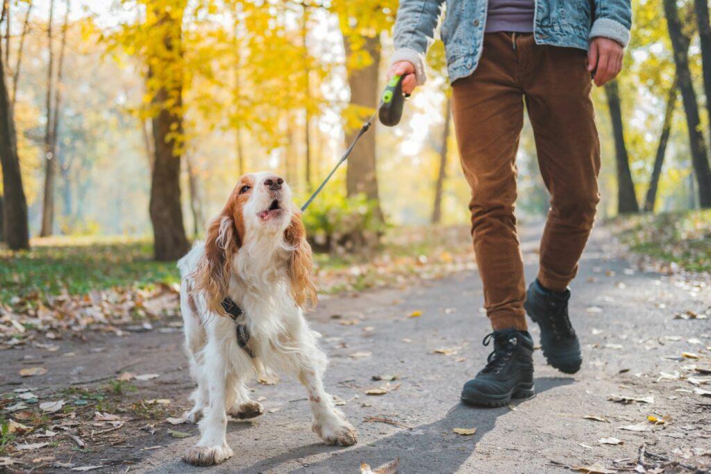 hund an der leine spaziergang