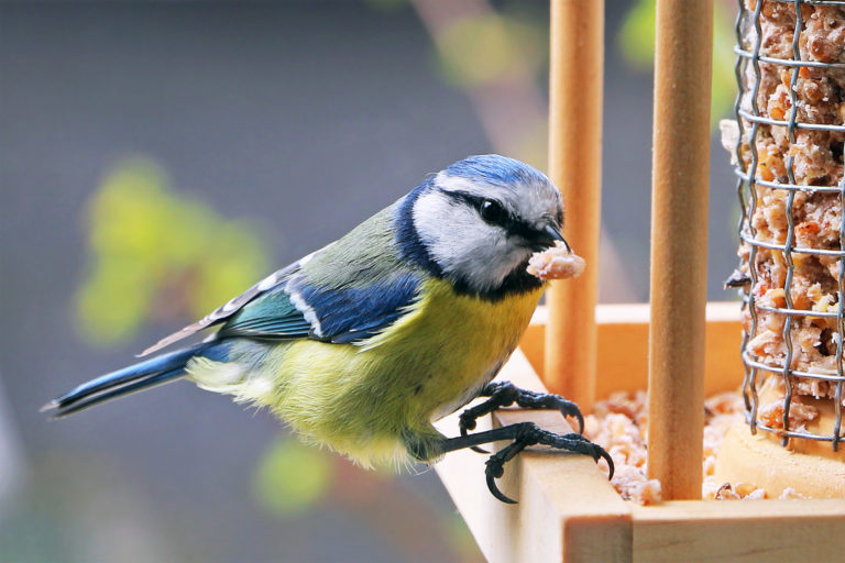 vogelvoer voor wilde vogels