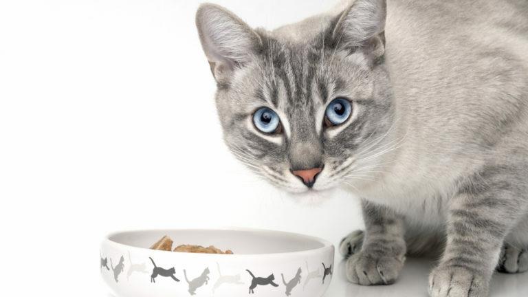kattfoder vuxen katt