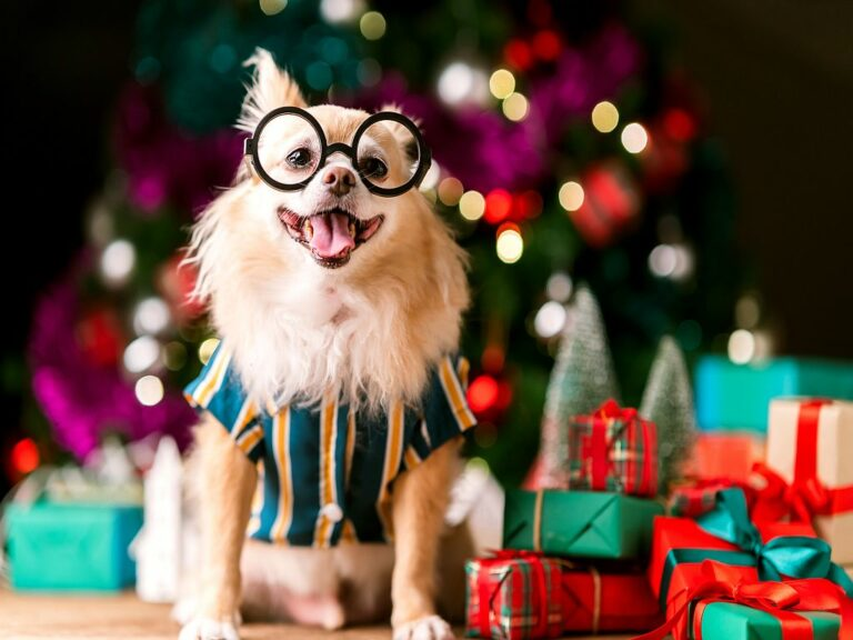 Julgåvor för hund