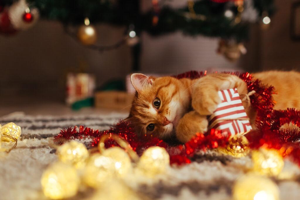 Katt leker med julpynt