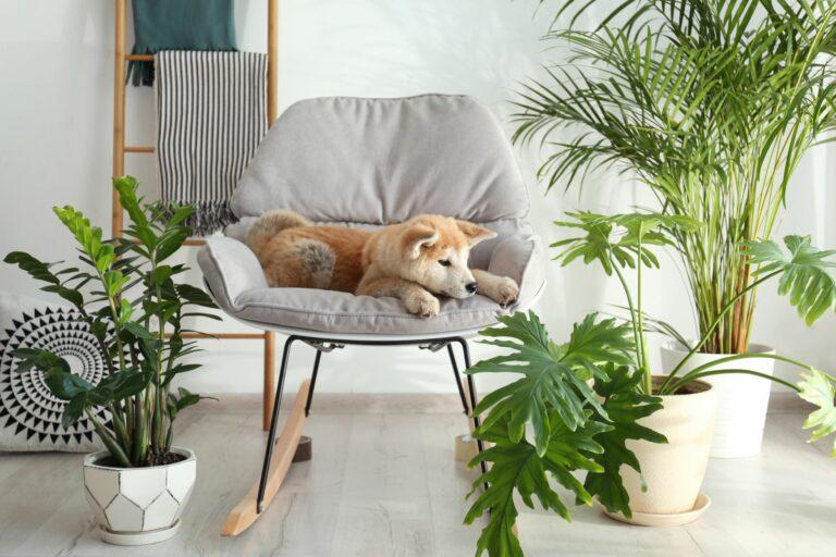 Giftiga växter för hundar