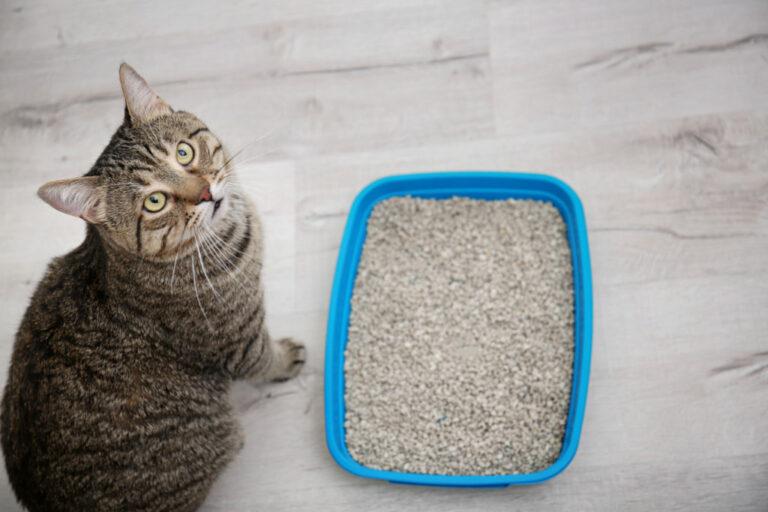 jämnför kattsand