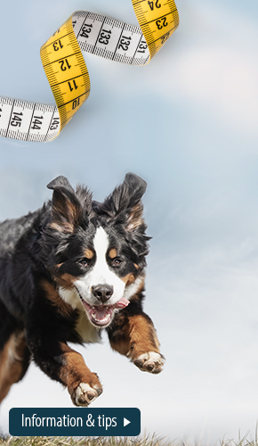 centralcampaign_obesity_09032021_magazine_general_BG_dog