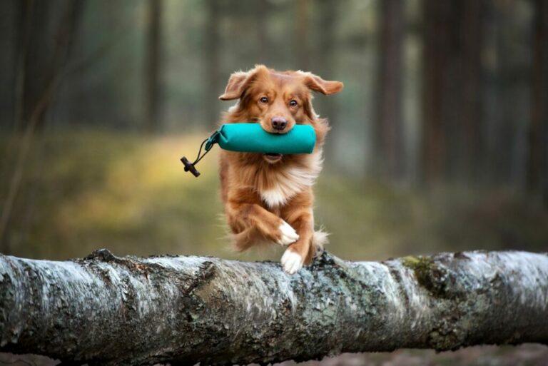 fitness för hundar