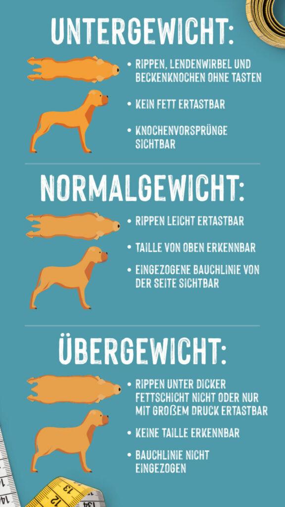 hund överviktig infograph