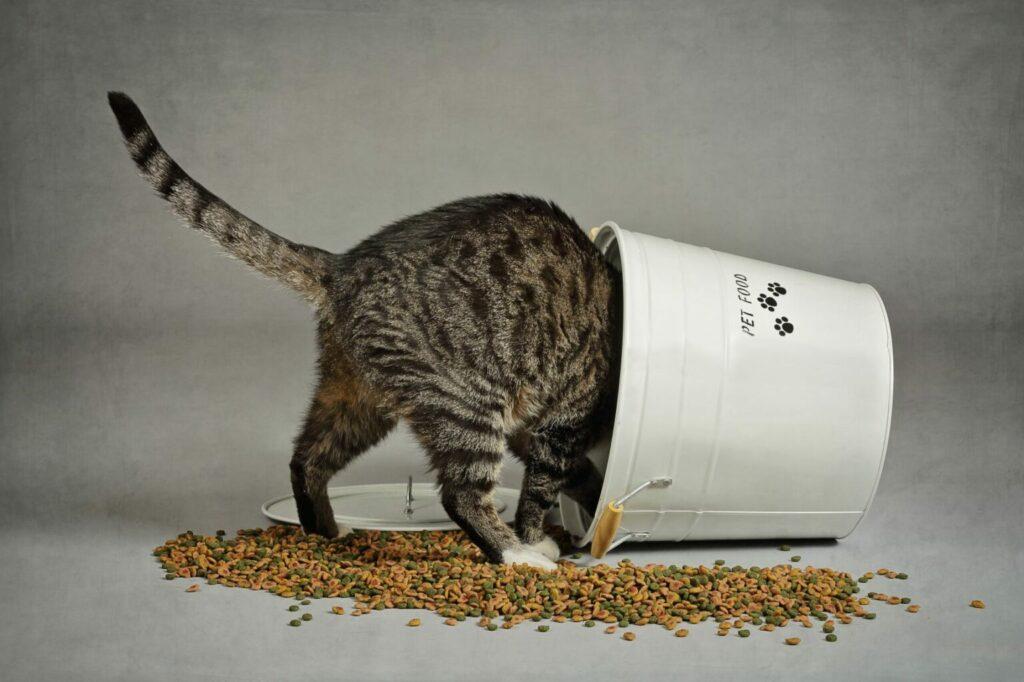 katt i hink av torrfoder