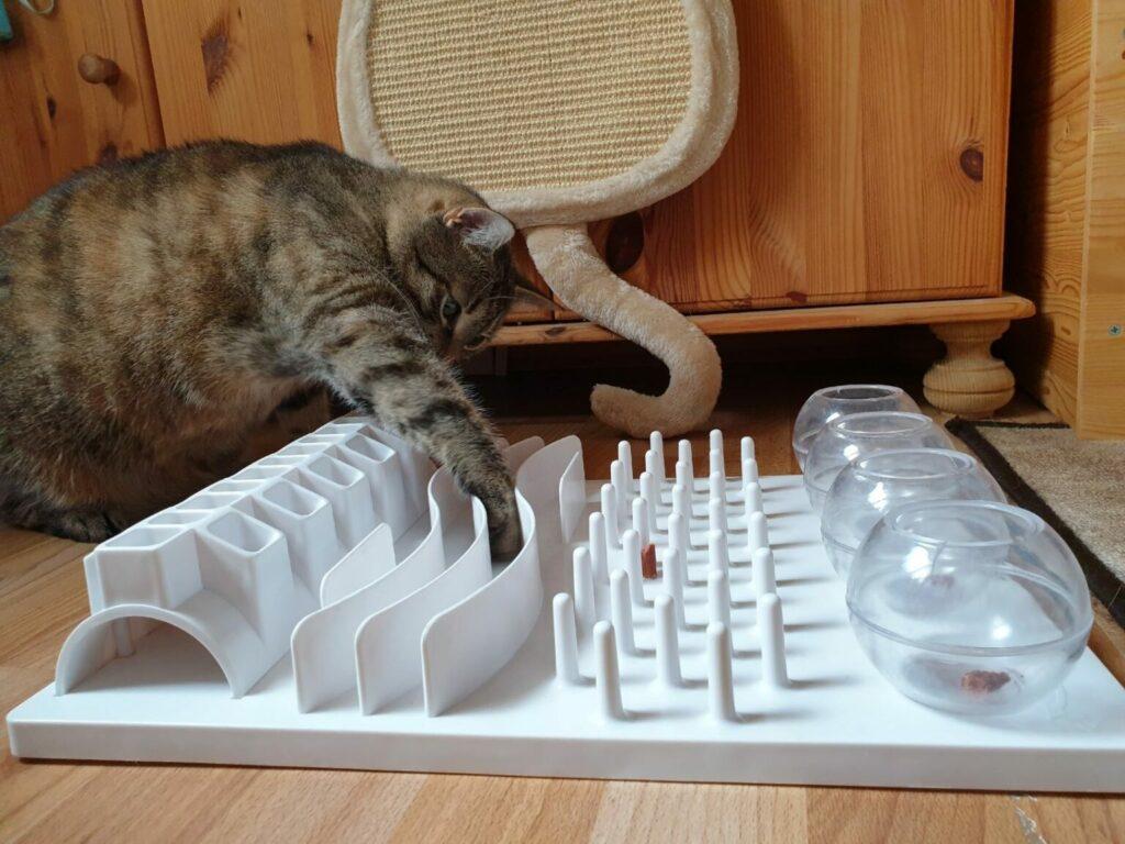 sport för katter Intelligensleksaker
