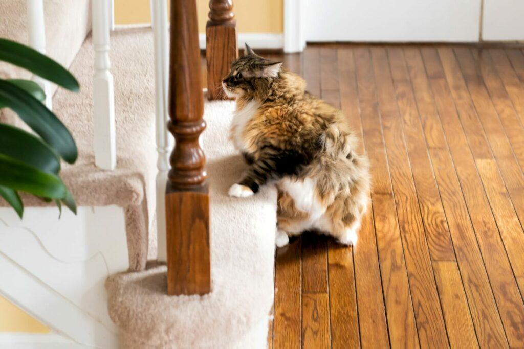katt motionerar i trappan