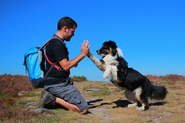 hundtrick high five