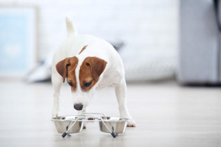 Byte av hundens foder