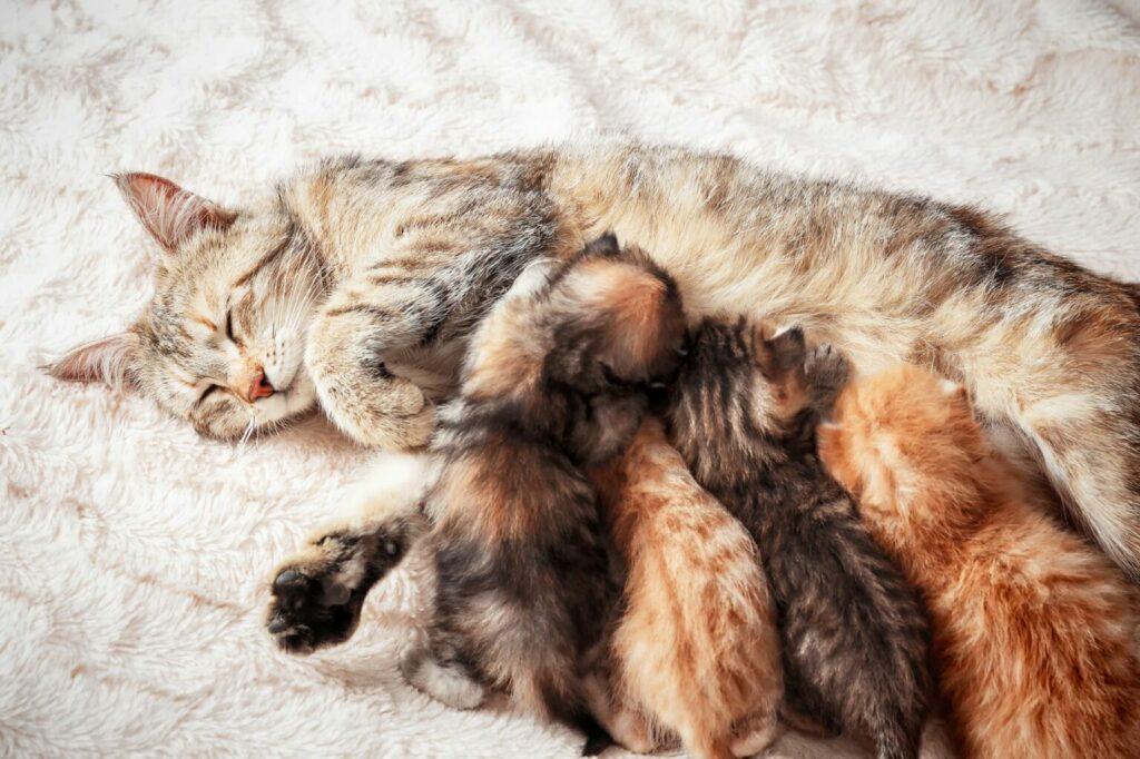 Kattungar får mjölk
