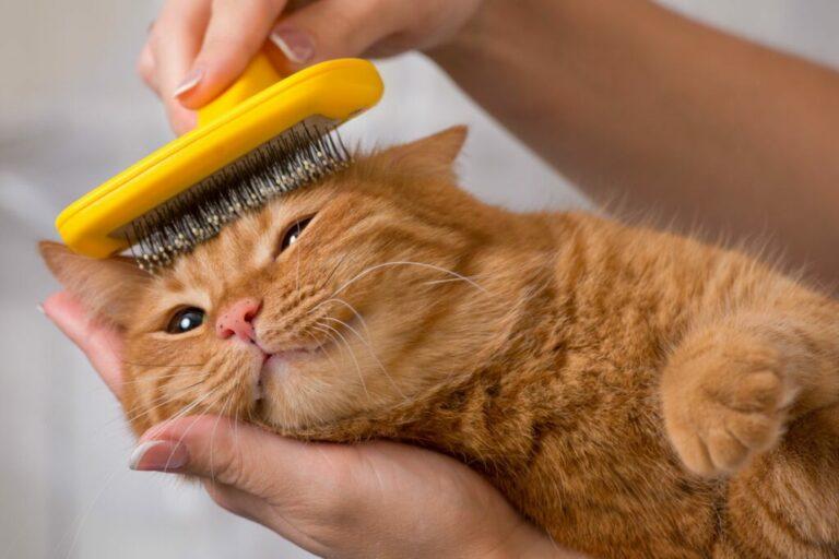 pälsvård hos katter