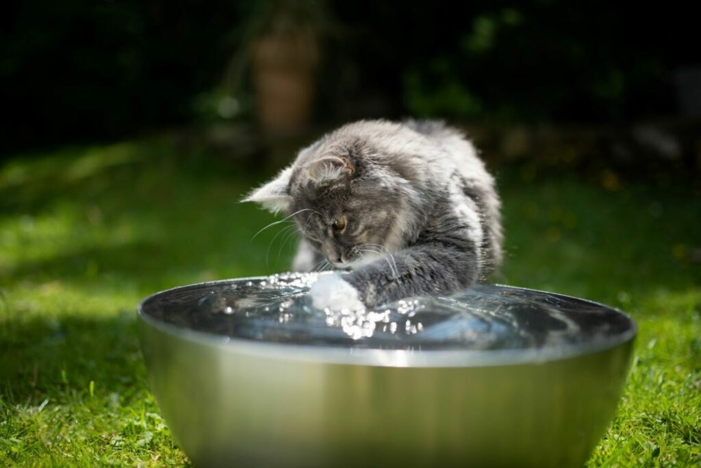katt varma dagar