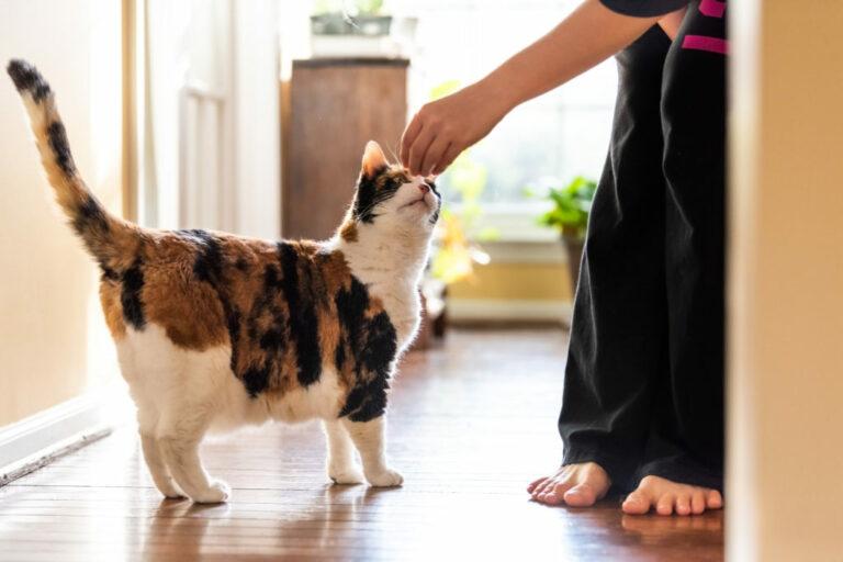 klickerträning med katt