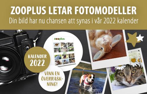 se_zooplus_calendar_2021_1