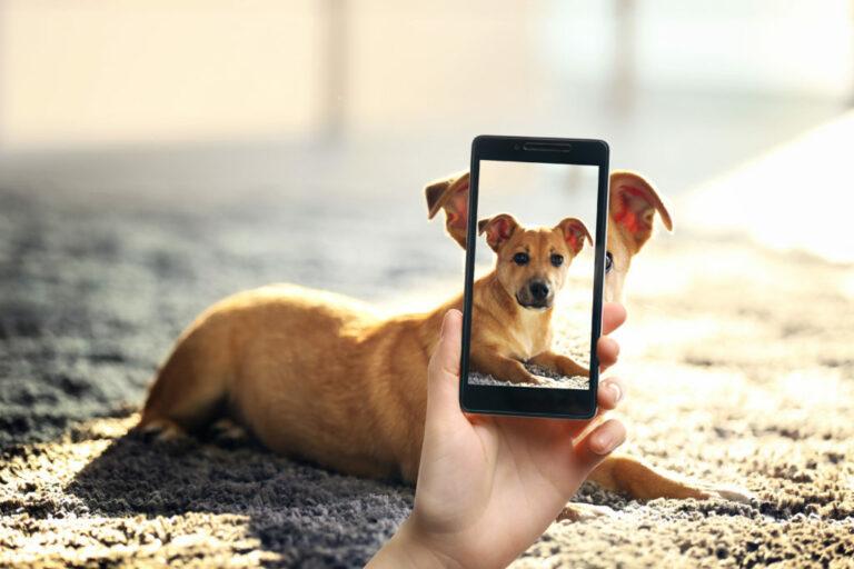 fotografera hund - hundfotografering