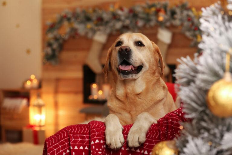 hund i julklapp