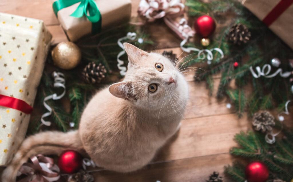 katt i julklapp