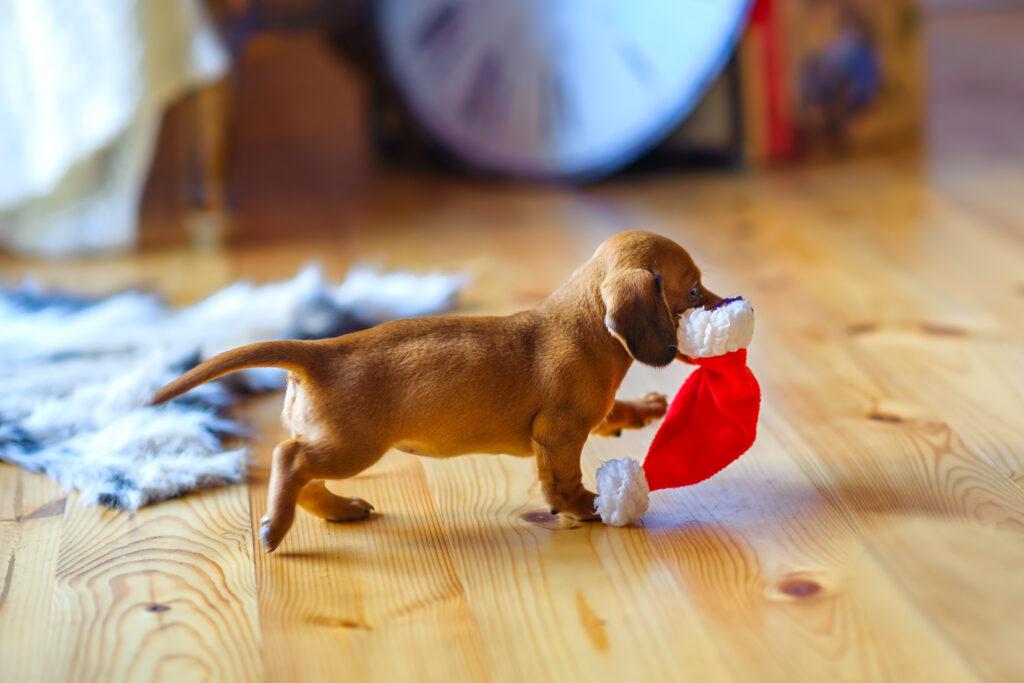 tax hund i julklapp